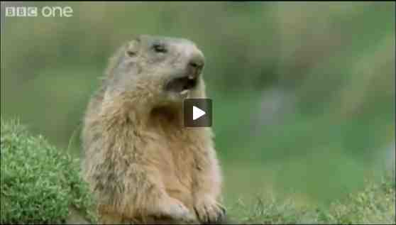 "Prairie dog from ""Hilarious British Animal Voiceovers""/BBC One, wimp.com, youtube.com"