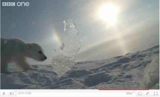 "Baby polar bear takes his first walk, image from ""Polar Bear: Spy on the Ice""/BBC One, youtube.com"