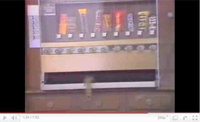 Squirrel raids candy vending machine