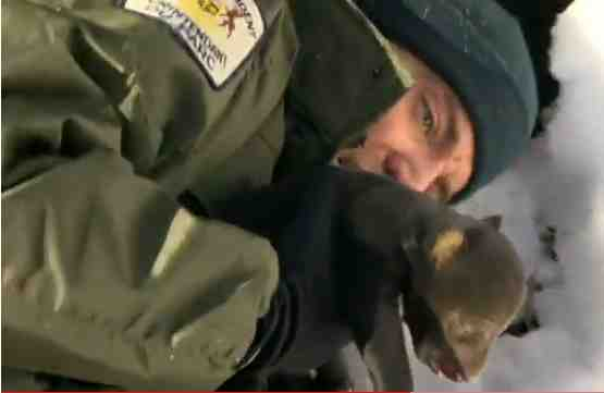 Rick Mercer lifts black bear cub from den, Algonquin Park, Ontario/youtube.com