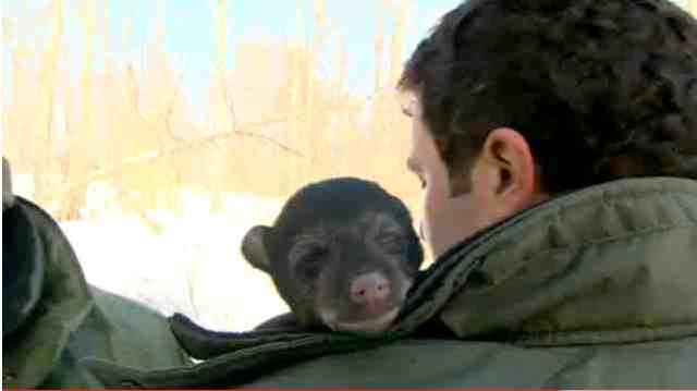 Rick Mercer & black bear cub, Algonquin Park, Ontario/youtube.com