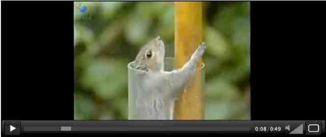 Squirrel at start of obstacle course