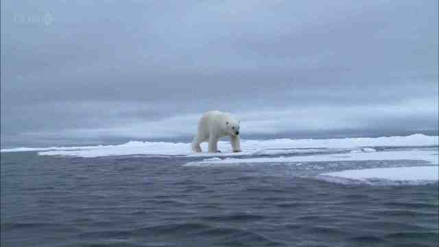 Polar bear walks at edge of ice, place & date unknown/BBC, phyrefile.com