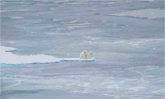 Polar bears along edge of Arctic sea ice, Sept 1 08/Jessica K. Robertson, U.S. Geological Survey, usgs.gov