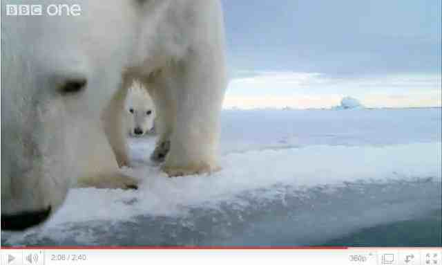"""Mother polar bear investigates floating Iceberg Cam as baby watches, image from """"Polar Bear: Spy on the Ice""""/ BBC One, youtube.com"""