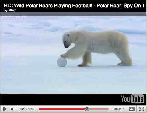 "Polar bear paws Snowball Cam, image from ""Polar Bear: Spy on the Ice""/BBC One, youtube.com"