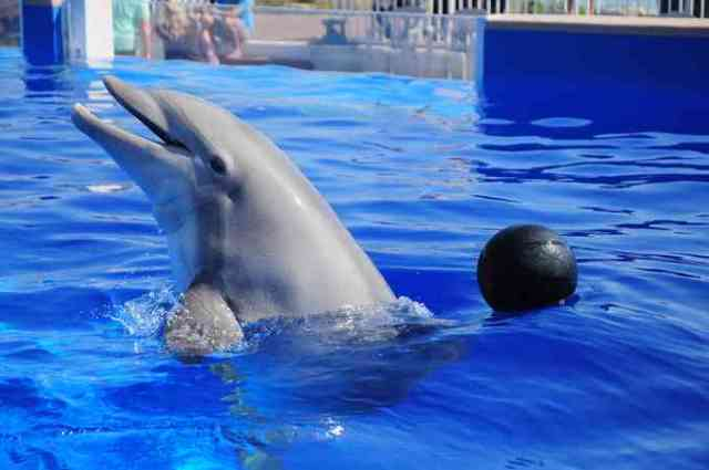 Nellie, 58, the oldest dolphin in captivity, Marineland of Florida, St. Augustine, undated/13 News, Central Florida News, cfnews13.com