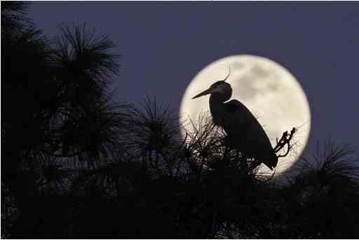 Supermoon, Daytona Beach, FL, March 19, 2011/gwinnettdailypost.com