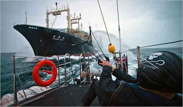 Sea Shepherd activists & Japanese whaling factory ship confront each other in  Antarctic waters, undated/ Simon Ager, Sea Shepherd Conservation Society, AP, The New York Times, nytimes.com