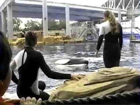 Dawn Brancheau interacting with Tilikum moments before her death, SeaWorld Orlando, Feb 24 2010/photo from video by Todd Connell, AP, Orca Aware, orcaaware.com