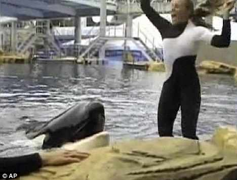 Dawn Brancheau with Tilikum moments before the attack, SeaWorld Orlando, Feb 24 2010/photo from video by Todd Connell, AP, MailOnline, dailymail.co.uk