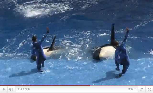 "Unidentified orcas and trainers perform during premiere of ""One Ocean,"" SeaWorld Orlando, April 22 2011, image from video/OrlandoAttrationsMagazine, AttractionsMagazine.com, youtube.com"