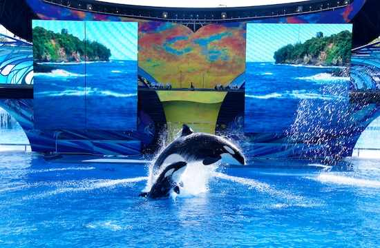 "Unidentified orcas jump before LED screens during premiere of ""One Ocean,"" SeaWorld Orlando, April 22 2011/Orlando Attractions Magazine, AttractionsMagazine.com"