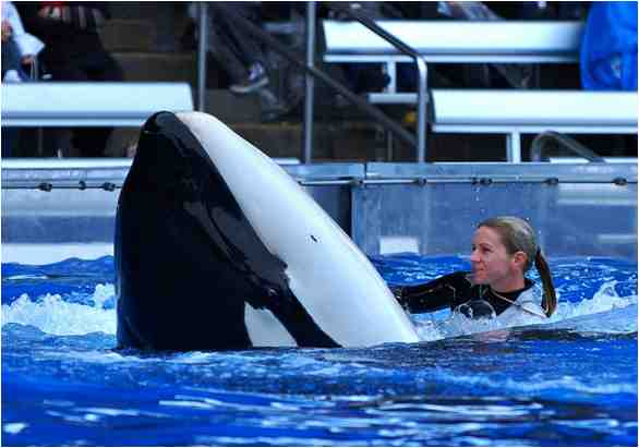 Kalina, now deceased, and unidentified trainer, SeaWorld Orlando, Dec 13 2008/orcalover109, outdoors.webshots.com