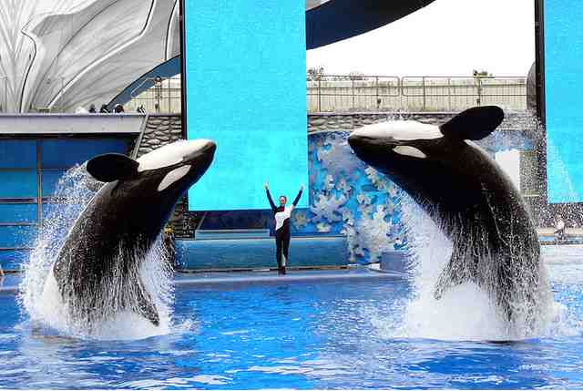 Kalina  & Taima with unidentified trainer, SeaWorld Orlando, Aug 31 2008/SumarSummers, flickr.com