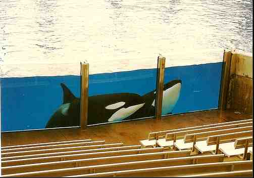 Kalina and Taima, both now deceased, SeaWorld Orlando, Jan 15 2009/shannonsmsea, flickr.com