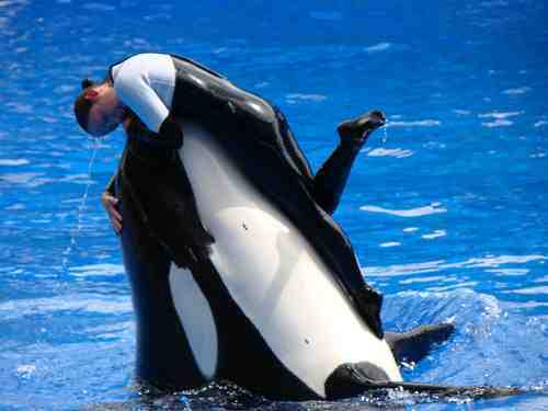 Kalina, now deceased, and unidentified trainer, SeaWorld Orlando, undated/sealife-adventure.webs.com
