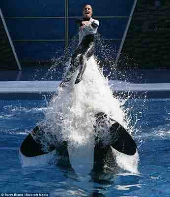 Dawn Brancheau & Nalani, SeaWorld Orlando, March 09/Barry Bland, Barcroft, coolfwdclip.blogspot.com