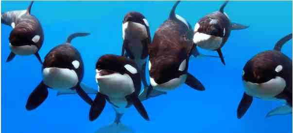 Nalani Katina Taima, Malia, Kayla, Trua, Kalina, SeaWorld Orlando, undated/SeaWorld, Alyssa Scully, flickr.com