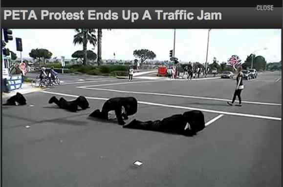 PETA protesters dressed in Orca costumes crawl out into roadway leading into SeaWorld San Diego, Feb 5/NBC San Diego, nbcsandiego.com