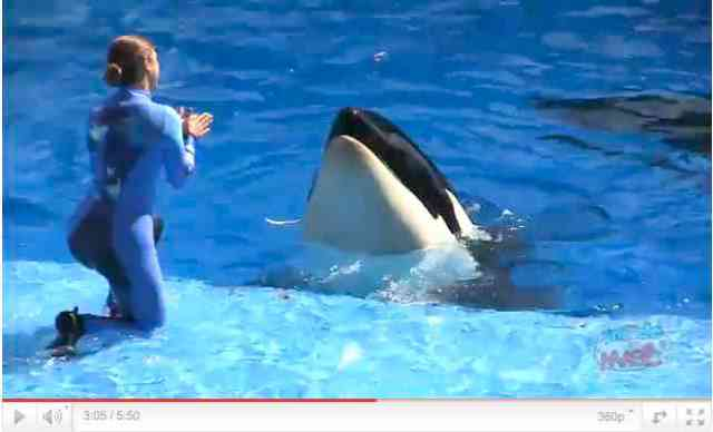 "Unidentified orca and trainer perform in premiere of ""One Ocean,"" SeaWorld Orlando, April 22 2011, image from video/InsideTheMagic, youtube.com"