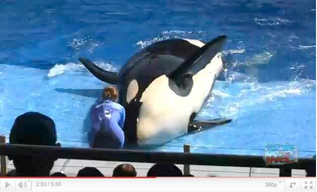 "Unidentified Orca & trainer perform in debut of ""One Ocean,"" SeaWorld Orlando, April 22 2011, image from video/InsideTheMagic, youtube.com"