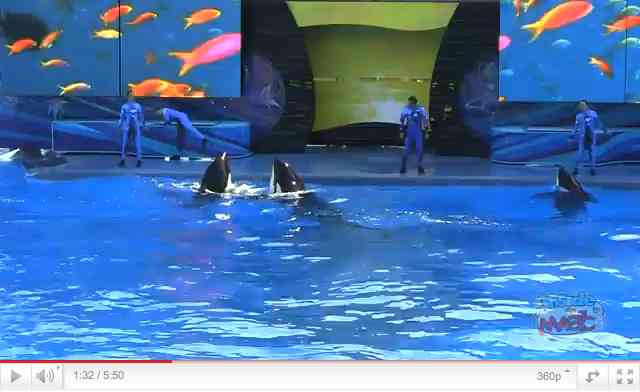 "Orcas and trainers at center stage during first performance of ""One Ocean,"" SeaWorld Orlando April 22 2011, image from video/InsideTheMagic, youtube.com"