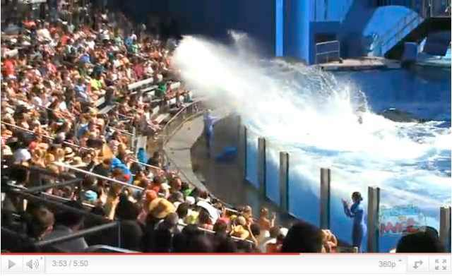 "Tilikum splashes crowd at debut of ""One Ocean,"" SeaWorld Orlando, April 22, image from video/InsideTheMagic, youtube.com"