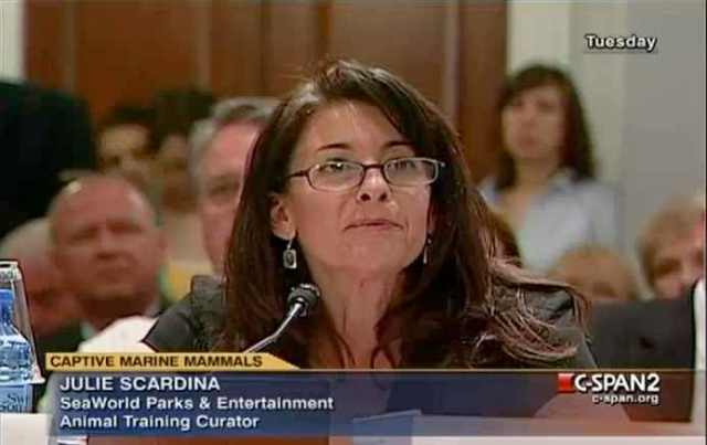 SeaWorld Parks & EntertSeaWorld Parks & Entertainment Curator of Animal Training Julie Scardina testifies at House Natural Resources Subcommittee Hearing, Washington, D.C., April 27 2010/C-Span Video Library, C-spanvideo.orgainment Curator of Animal Training Julie Scardina testifies at House Natural Resources Committee Hearing, Washington, D.C., April 27 2010/C-Span Video Library, C-spanvideo.org