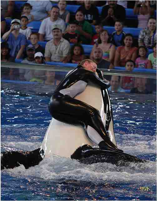 Unidentified trainer & unidentified orca, SeaWorld San Antonio, Aug 26 2006/gyroscopics, flickr.com