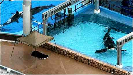 SeaWorld, Orlando after the attack, Tilikum at right, Feb 24 2010/AP, babyboomeradvisorclub.com