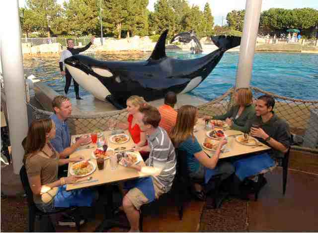 Dine with Shamu, park unspecified, January 08/SeaWorld, Inc., Alyssa Scully, flickr.com
