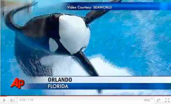 SeaWorld Stages Its Comeback | Gini's Nature News