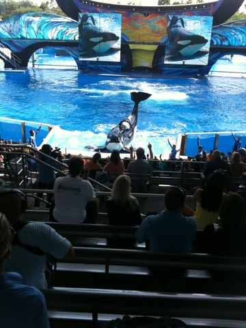 "Tilikum performs in ""One Ocean,"" SeaWorld Orlando, April 22/Central Florida 13 News, cfnews13.com"