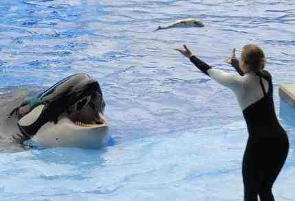 Kalina & unidentified trainer perform during first show after Dawn Brancheau's death, SeaWorld Orlando, Feb 27, 2010/ Phelan M. Ebanhack, AP, palmbeachpost.com