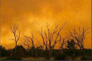 Smoke from the Wallow Wildfire surrounds trees in Eagar, AZ, June 7, 2011/Joshua Lott, Reuters, reuters.com