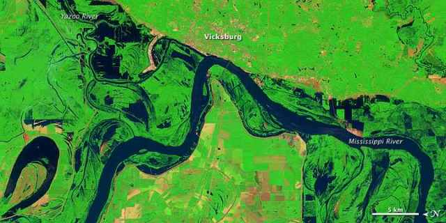 Landsat 5 Satellite image of lingering floodwaters near Vicksburg, MS, June 11, 2011/USGS, NASA Earth Observatory, earthobservatory.nasa.gov