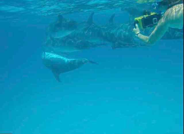 Denise Herzing & spotted dolphins, July 16, 2011/Kaitlin Marsh