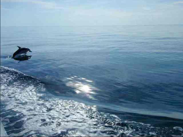 Spotted dolphin, Bahamas, July 16, 2011/Kaitlin Marsh