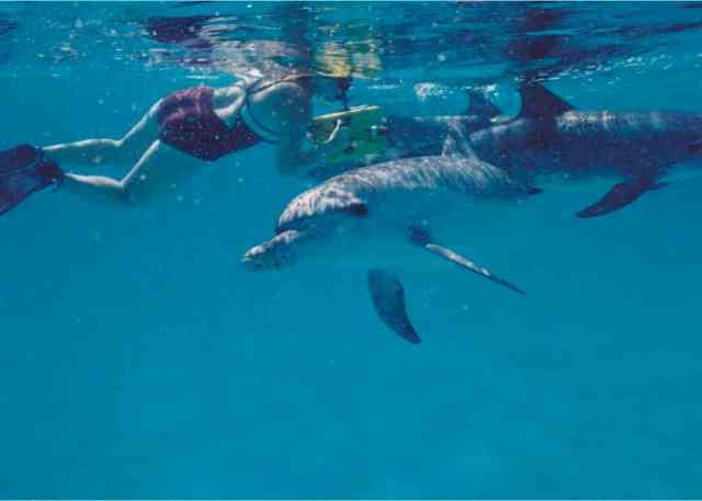 Denise Herzing & spotted dolphins, Bahamas, Summer 1989/Craig Murray