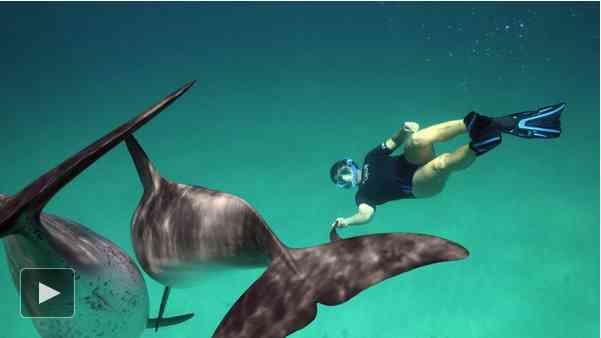 Denise Herzing and dolphins, Bahamas, 2011/Eric Olsen, The New York Times