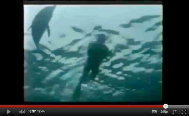 "Robin Williams & Stubby, Bahamas, 1992/ ""In the Wild: Dolphins with Robin Williams,"" PBS, part 3, 2 of 3, youtube.com"
