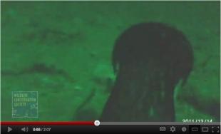 Video still of Imperial Cormorant 150 feet under water, Punta Leon, Patagonia, Dec 14, 2011/WCS.org, youtube.com