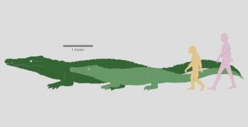Ancient & modern crocodile with ancient & modern human to scale/Chris Brochu, University of Iowa,redorbit.com