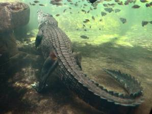 Crocodile, location & date unknown/The Independent