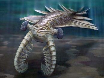 Artist's rendering of prehistoric Anomalocaris/Katrina Kenny, University of Adelaide, Nature, The Guardian
