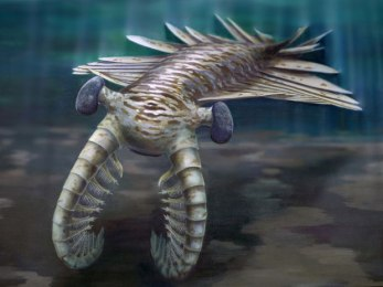 Artist's rendering of prehistoric Anomalocaris/Katrina Kenny, University of Adelaide, Nature, The Guardian