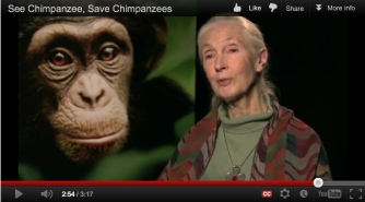 "Oscar, the star of ""Chimpanzee"" & Jane Goodall/ disney.com, janegoodall.or"