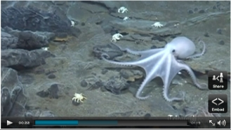 Newly discovered species of Octopus, Southern Ocean, undated/Oxford U., Telegraph.co.uk