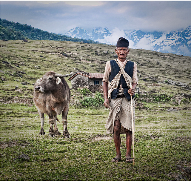 Herder, Nepal, April 25, 2011/ © Sam Gellman